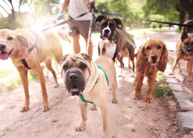Walk With Tanya Pet Sitting Services